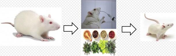 pesquisa-plantas-medicinais