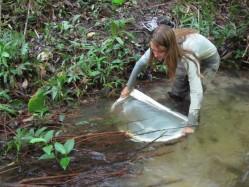 O estudo abordou o impacto de atividades humanas sobre a condição ambiental e fauna de peixes de igarapés amazônicos