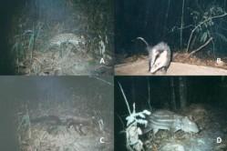 Levantamento da fauna - diversidade preservada