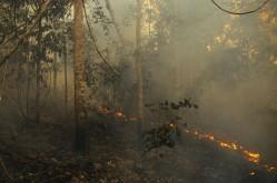 pesquisa-amazonia-1