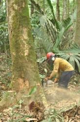 pesquisa-amazonia-4