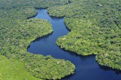 Professor da UFLA contribui com estudo publicado na PNAS - pesquisa revela a diversidade de plantas na Amazônia